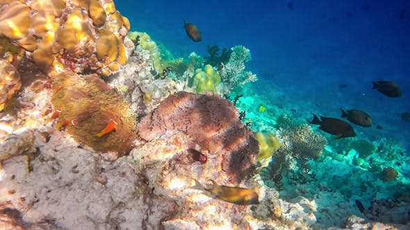 Thumbnail for Coral Reef In The Maldives