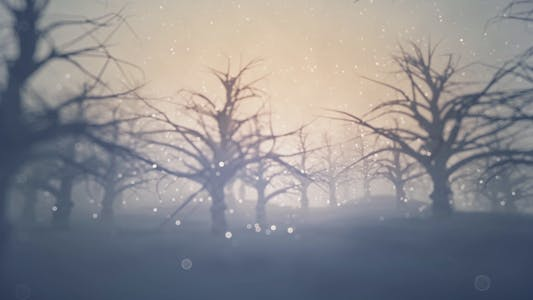 Thumbnail for Forest Covered with Snow