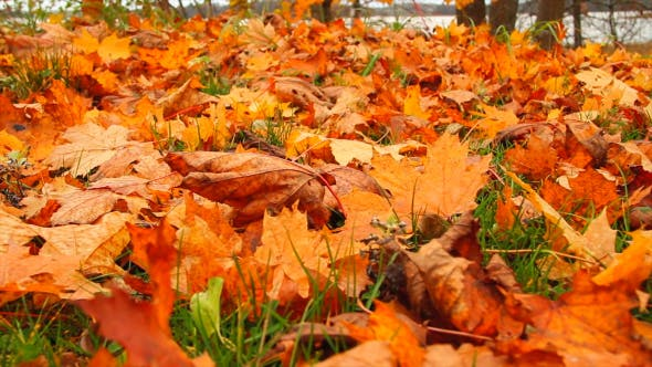 Thumbnail for Autumn Leaves In Grass