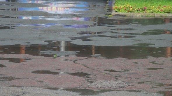 Thumbnail for Rain Drips Through The Puddles