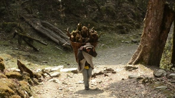 Thumbnail for Mountain Porter Carrying Firewood