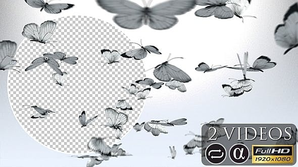 Black and White Butterflies - 2 Pack