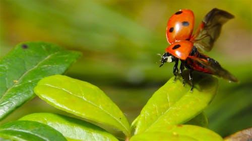 Ladybug Takes Off