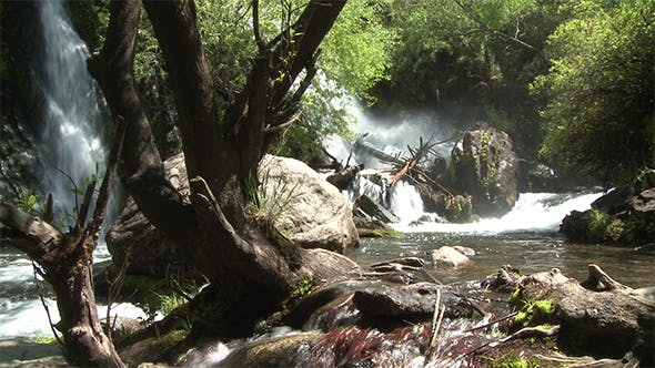 The Wilds Of Argentina