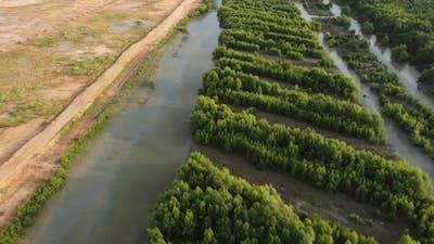 Mangrove tree and yellow soil