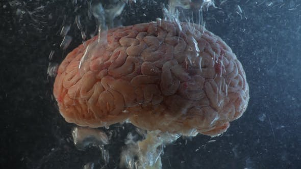 Brain in a Water Tank with Oxygen