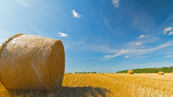Thumbnail for Bale Of Hay In The Field