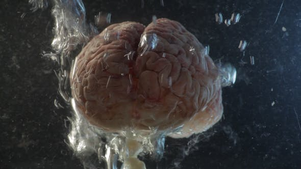 Brain in a Water Tank with Oxygen 03