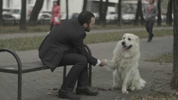 Thumbnail for Businessman And His Dog Shakeing Hands Playing In