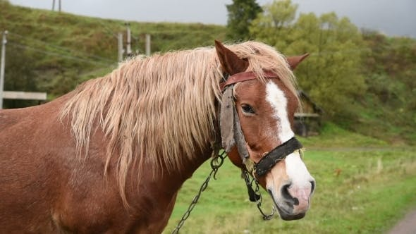 Thumbnail for Horse With Beautiful Mane