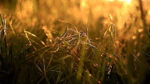 Sun's Rays Through The Grass