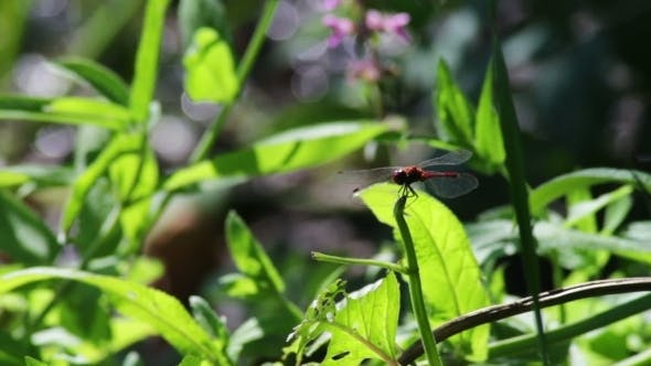 Thumbnail for Dragonfly On a Branch Plant