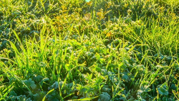 Thumbnail for Melting Frozen Grass