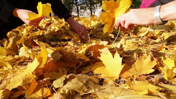 Thumbnail for A Girl And a Man Throw The Yellow Fallen Leaves