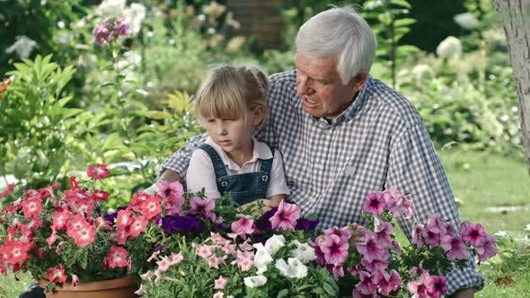 Thumbnail for Elderly Man and Little Girl Looking at Flowers
