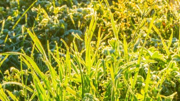 Thumbnail for Melts The Frozen Grass