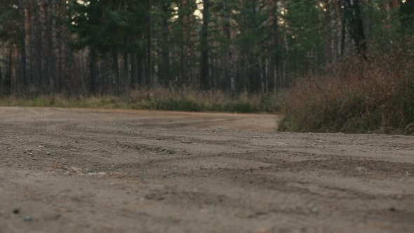 Thumbnail for A Rally Car In The Forest