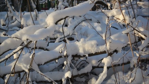 Thumbnail for Winter Forest In Snow