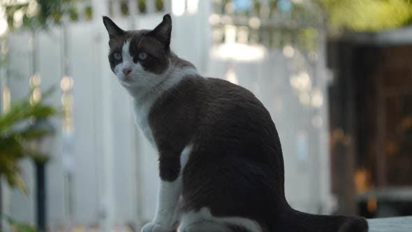 Cat Looking Around