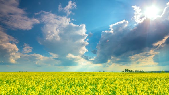 Thumbnail for Rape Field And Dramatic Sky