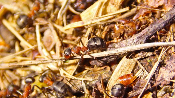 Ants Building Anthill Together