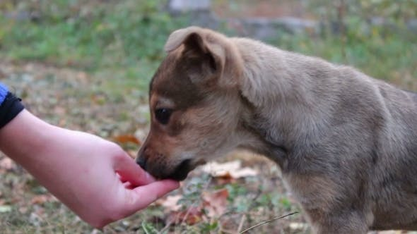 Thumbnail for Woman Feeds The Homeless Puppies On The Street