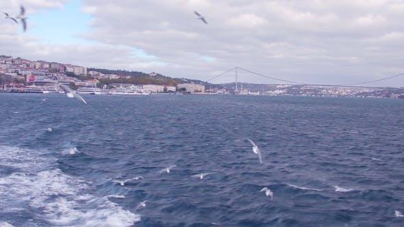 Cover Image for Istanbul Bosphorus Bridge and Seagulls