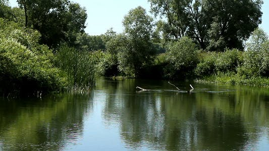Cover Image for Summer Landscape of Small Rivers 2