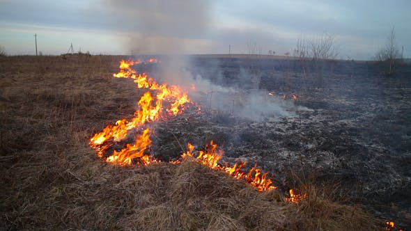 Cover Image for Burning Dry Grass