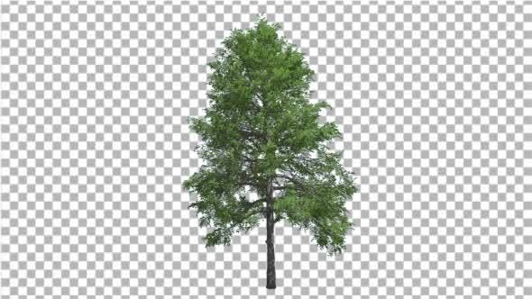 Thumbnail for Black Gum Swaying Tree Branches Green Swaying