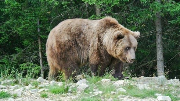 Thumbnail for Big Bear Near
