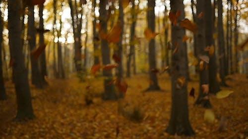 Fall Autumn Leaves 2