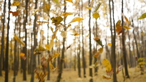 Fall Autumn Leaves 4
