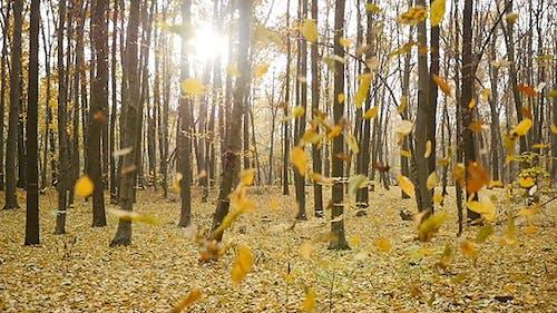 Fall Autumn Leaves 5