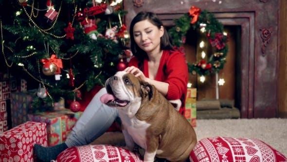 Thumbnail for Puppy Christmas English Bulldog