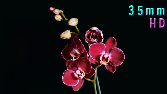 Purple Orchids Flower 03