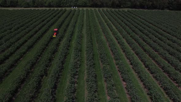 Thumbnail for Aerial view of tractor mowing and spraying blueberry field