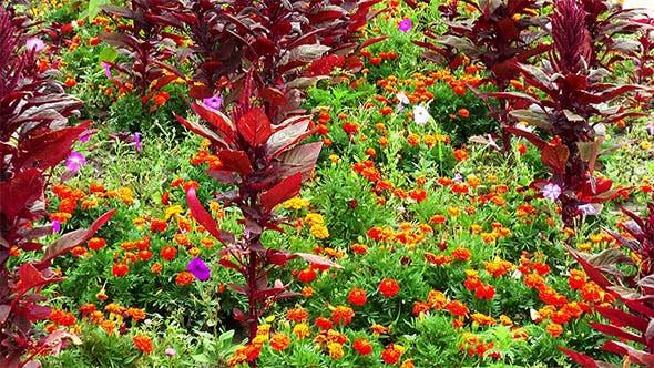 Thumbnail for Rot und Orange Blumen im Blumenbeet
