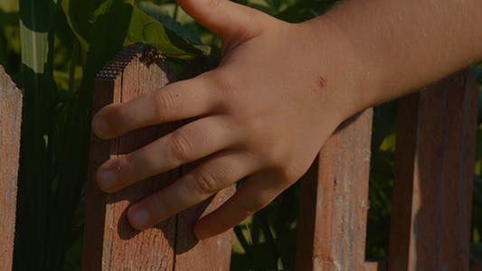 Cover Image for Little Hand Fence