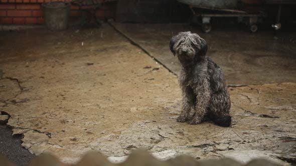 Thumbnail for Sad Wet Dog Under Rain