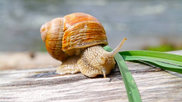 Thumbnail for Snail And Grass