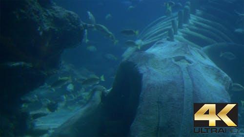 Blick auf Ozeanwesen