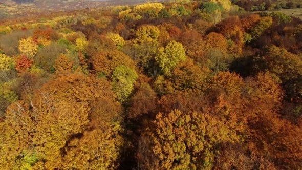 Flying Above Autumn Forest