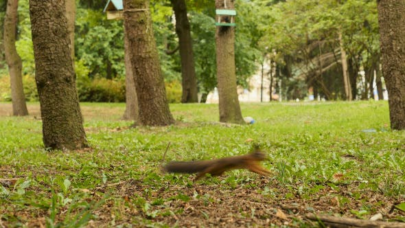 Thumbnail for Squirrel Finds the Food in the Park