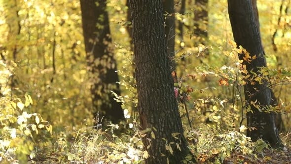 Thumbnail for Little Girl Hiding Behind a Tree
