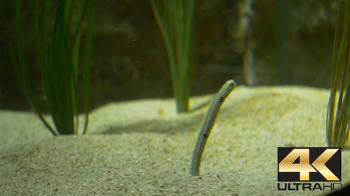 Tropical Pipefish Species