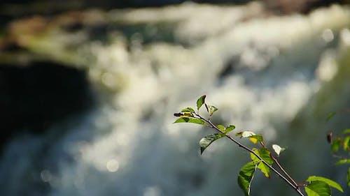 Fresh Green Leaves, Turbulent Water Torrent Background