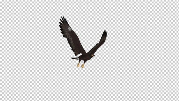 Black Hawk - Flying Loop - Side Angle