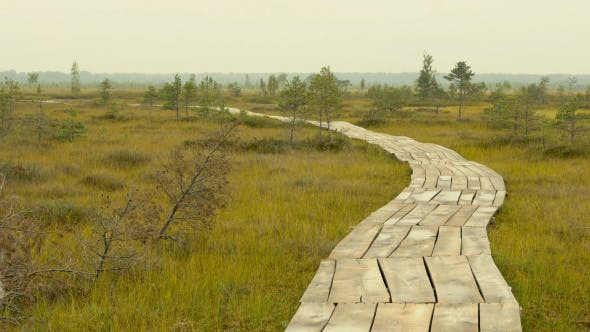 Thumbnail for Wooden Walkway through the Field