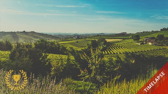 Thumbnail for Hills and Vineyards